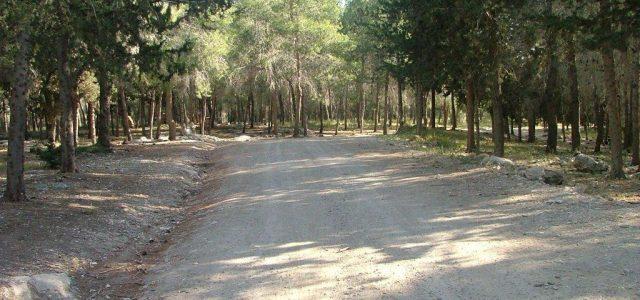 """טיול לסופ""""ש: אל יער המגנים"""
