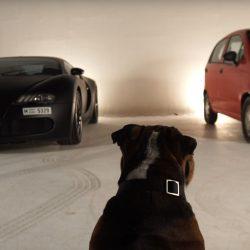 שברולט מאטיז או בוגאטי ויירון? איזה רכב מעדיפות חיות?